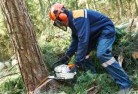 Dombarton Tree cutting services 21